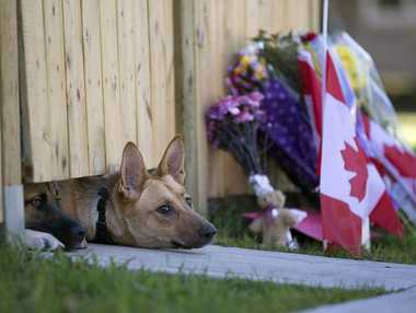 Dogs peek out from under a gate at the Cirillo family home in Hamilton, Ontario near flowers and flags that have been left on Thursday, Oct. 23, 2014.