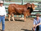 RECORDS tumbled at last week's annual Artesian Droughtmaster Bull Sale in Blackall.