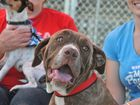 The RSPCA hosted a dog adoption day on Sunday.