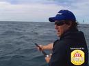 Catching big sharks