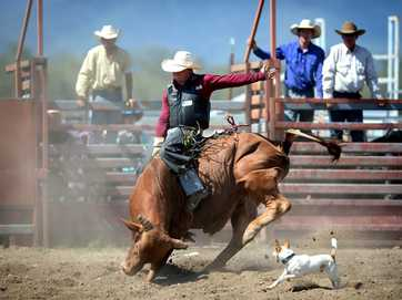 Action from Gavial Creek Bulls and Barrels on the weekend.