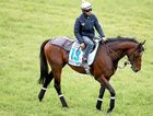 READY TO RUN: Protectionist during trackwork ahead of the Melbourne Cup at Werribee Racecourse yesterday.