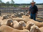 GRAZING sheep on the Downs is a far cry from life on the family wool property outside Yaraka, where Kirk Penfold earned his wool growers' stripes.