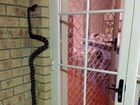 'Honey, I'm home': Snake greets woman at the door