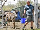 """PROPOSED changes to animal exhibition laws today facing scrutiny from a parliamentary committee could kill the """"traditional"""" circus in Queensland."""