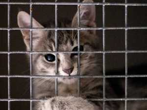 The Wacol centre took in 7846 pets in the past 12 months and a further 2799 were sent to Wacol from other shelters.
