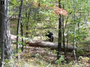 Hiker took photo of black bear moments before it killed him