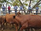 BURNETT Livestock and Realty's meatworks and store sale on Monday, June 1, had a yarding of 1347 head.