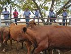 Livestock market will rely on rain