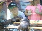 SPLASHING, swimming and jumping around; the new otters at Rockhampton Zoo were putting on a show.