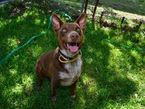 Chocco is just one of the happy dogs looking for a home for Christmas.