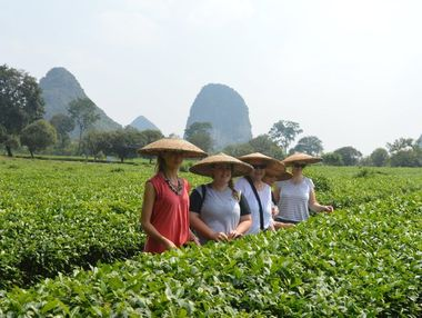 Megan Mackander (second from left) with her travel companions scouring through the Guilin tea plantation. Photo Megan Mackander / Sunshine Coast Daily
