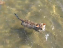 Kitten Diego's swim sparks extreme excitement