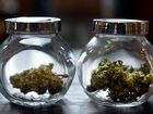 Survey finds two-thirds of Australians support medicinal pot