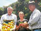 TRIAL batches of Queensland mangoes and lychees will be sent to the USA, helping growers to open up a big new market and potentially give them a higher return.