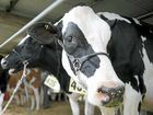 BIG PLANS: Hope Dairies intends to export 150 million litres of milk a year to China from its Queensland base.