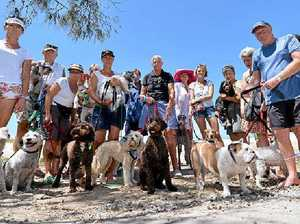 BIG BITE: Protesters on Sunshine Beach are very concerned that the dog-friendly beach laws are about to change because of a noisy few.