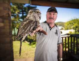 Awesome the tawny frogmouth gets a feed and a bath