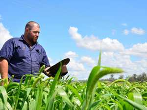 EXTREME HEAT: Nanango farmer Jason Black's crops are set to prosper with this week's heat wave.