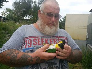 DEVASTATED: CQ parrot farmer and owner of Karmic Aviaries Mick Blake cradles two of his beloved birds that died in the aftermath of Cyclone Marcia.