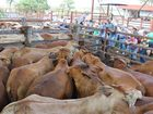 NUMBERS increased by 435 to total 996 head at the sale.