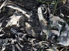 A HEARING date has finally been set for the case involving two people charged with firearms offences following the discovery of more than 50 greyhound carcasses at Coonarr in March.