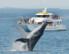 Boaties warned to steer clear of whales