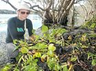 A COMMUNITY effort has saved Lennox Head's Lake Ainsworth from being smothered – for now.
