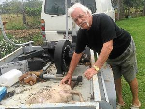 Tony Harold of Tinana with a month-old lamb he believes lost its life to a pack of either wild or domesticated dogs.
