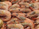 A RESEARCH project looking at reasons for declining school prawn numbers on the North Coast is under way in the Camden Haven Estuary, south of Port Macquarie.