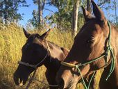 KINGAROY Detectives are investigating the unlawful shooting of a Quarter Horse mare in the Tamaree (Gympie) area.