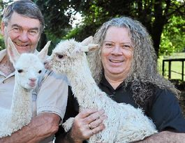 South American comes to Coast when alpacas move in