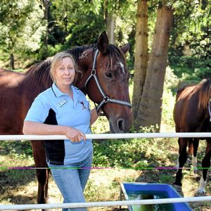 Anger over horses found in creek after flooding - Clarence Valley Daily Examiner