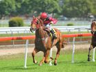 """AFTER dismounting from Gunnaza, who won the C & G Maiden at Grafton yesterday, experienced rider Stephen Traecey had one word for connections – """"easy."""""""