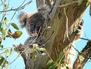 Bellingen hosted a major koala summit for the conservation movement on Friday