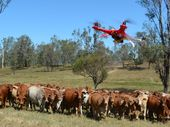 THEY are no phantom menace; the cattle in Queensland are now under attack from drones in a robot round up.