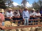 WARWICK Selling Agents yarded 1487 lambs and hoggets, and 228 sheep at the weekly sale yesterday.