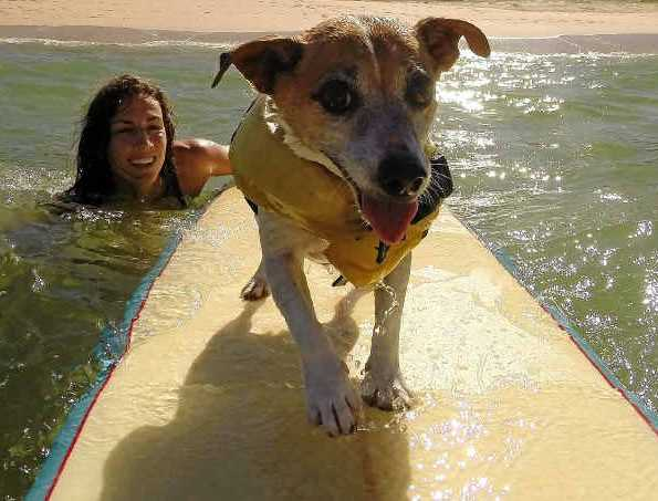 LOVED THE BEACH: Tegan Lloyd with her beloved jack russell terrier, Ruby. Nothing could be done to save the dog after a brutal attack.
