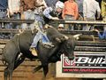 Rockhampton mourns loss of talented bull rider