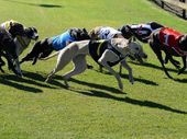 THE Bundaberg Grand Prix (550m) attracted some handy greyhounds to Thabeban Park, but when it mattered the Chris Gear-trained Alarm Bells pulled off a mighty run.