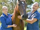 RARE BUT LETHAL: Gympie vet Justin Schooth will also speak at an information evening on the hendra threat at The Pavilion later this month.