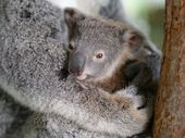 AUSTRALIA Zoo's latest celebrity animal family are going strong after life saving surgery.