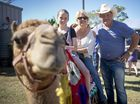 TURBO the camel and his two mates got plenty of attention at the show which the sure-legged lads, well used to being in the spotlight simply shrugged aside.