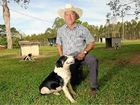 Alstonville's dog trials this weekend