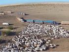 Cool livestock transport drone footage