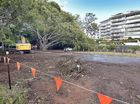 LETTER: New carparks under fig trees will ruin Esplanade
