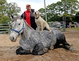 Veteran trainer credits horses with lifting her up