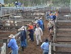 Sellers show confidence at Murgon sales with good returns