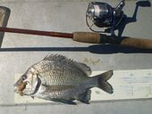 KNOWING how to measure your catch accurately is important to ensuring it complies with Queensland size limits.