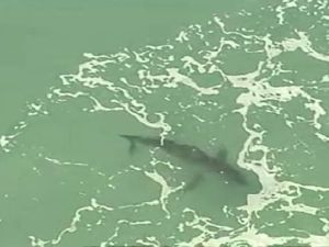 A shark is visible in the water near where the attack happened.